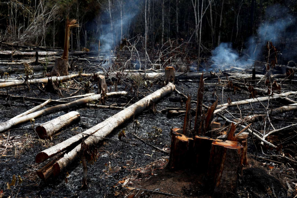 A tract of Amazon jungle burns after being cleared by loggers and farmers on 21 August 2019 in Novo Airao, Amazonas state, Brazil. Photo: Bruno Kelly / Reuters