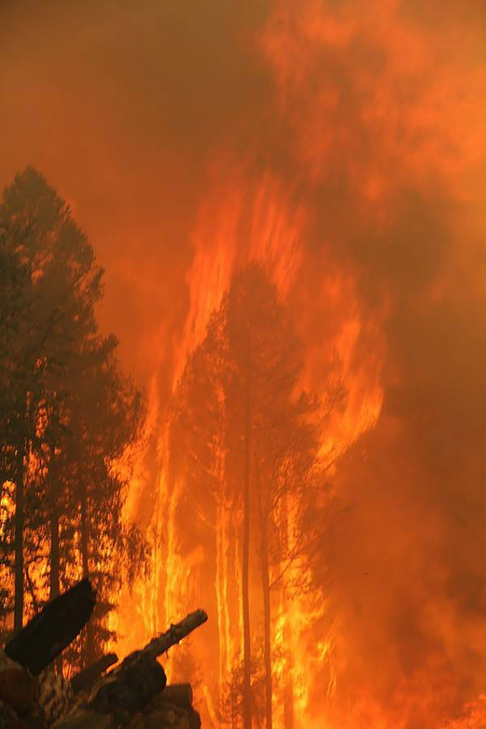 Flames consume a tree as wildfires rage in the Krasnoyarsk region of Siberia, 1 August 2019 Photo: The Siberian Times