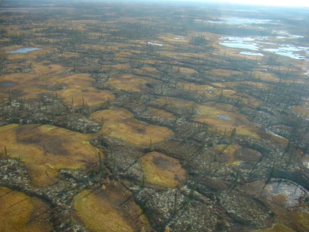 Aerial image of a permafrost peatland in Innoko National Wildlife Refuge in Alaska interspersed with smaller areas of thermokarst wetlands. Photo: Miriam Jones / U.S. Geological Survey