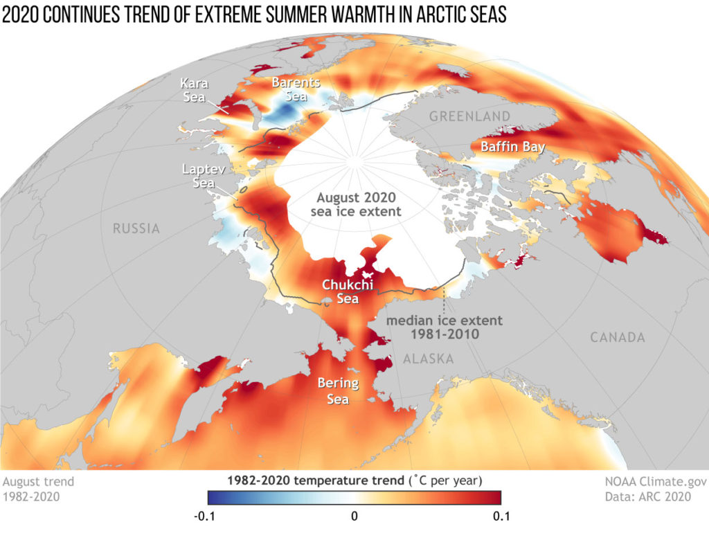 Map showing sea surface temperature trends in the Arctic from 1982–2020, showing where waters are warming (red and orange) and where they are cooling (blue). The gray line shows the median August sea ice extent, and the white areas show the ice extent in August 2020. NOAA Climate.gov map by Hunter Allen, based on data from Mary-Louise Timmermans and Zachary Labe. Graphic: Hunter Allen / NOAA