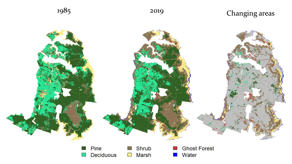 Habitat maps created for North Carolina's Alligator River National Wildlife Refuge showing the change over time as sea level rise kills trees en masse and causes ghost forests. Graphic: Ury, et al., 2021